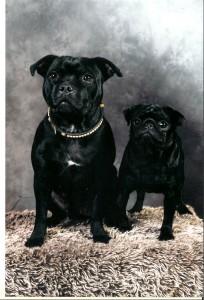 Vi letade bland alla hundbilder och hittade en bild tagen 2010, på utställning i Smålandsstenar. Bella och Vera är våra vackra fotomodeller för dagen.