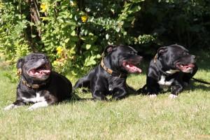 Lola, Bella och Daisy