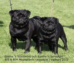 Scoobe och Ebba syskonbild