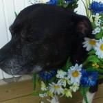 Lola 10 år