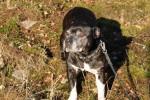 Lola, vår grand old lady, 11.5 år