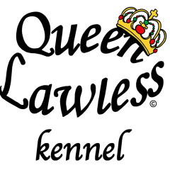 Mopskennel, uppfödning av svart och fawn mops
